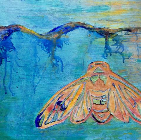 Cicada Oceana