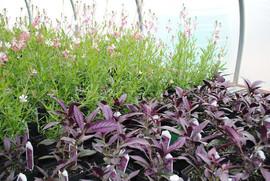 flowerbuds+varety+plants.jpg