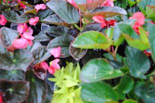 flowerbuds+variety+11.jpg