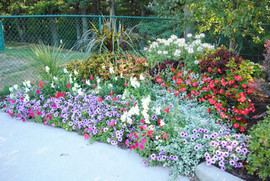 flowerbuds+variety+flowers.jpg