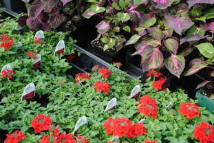 flowerbuds+plants+3.jpg