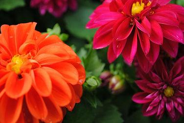 flowerbuds+purple+and+orange+flowers.jpg