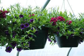 flowerbuds+hanging+baskets+9.jpg