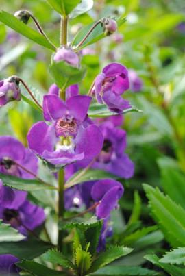 flowerbuds+purple+flower3.jpg
