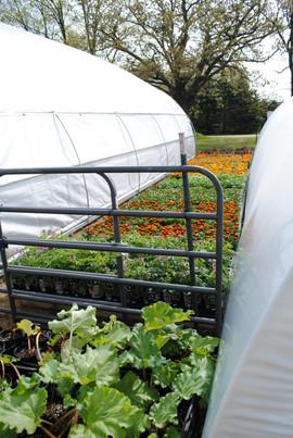 flowerbuds+starter+vegtable+plants.jpg