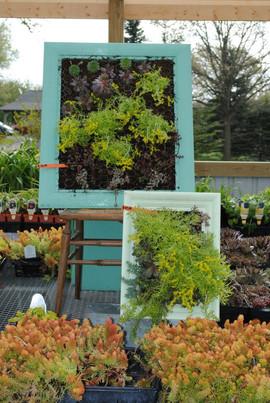 flowerbuds+picture+frame+arrangements.jp