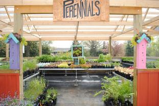 flowerbuds+perrinnals+building.jpg