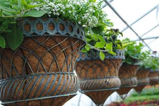 flowerbuds+hanging+baskets+5.jpg