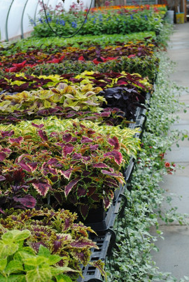 flowerbuds+variety+2.jpg