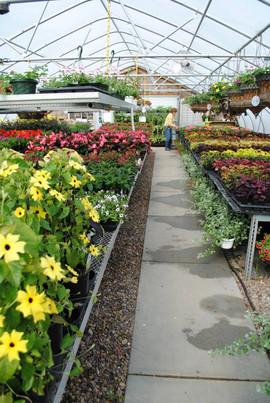 flowerbuds+greenhouse+isle.jpg
