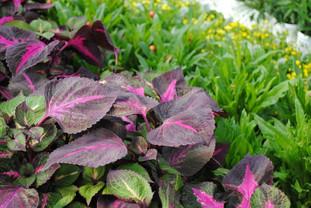 flowerbuds+plants+2.jpg