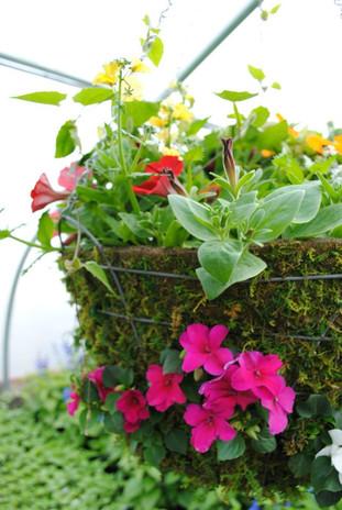 flowerbuds+hanging+basket4.jpg
