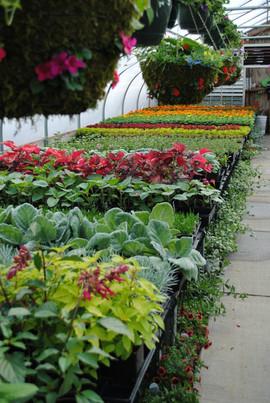 flowerbuds+variety+of+flowers.jpg