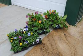 flowerbuds+flats.jpg