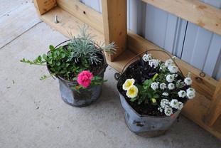 flowerbuds+bucket+flowers.jpg