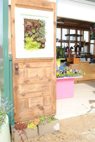 flowerbuds+doorr+art+planting.jpg