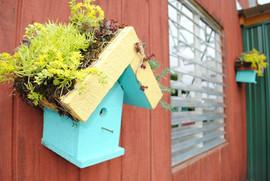 flowerbuds+small+planter.jpg