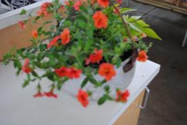 flowerbuds+flowers9.jpg