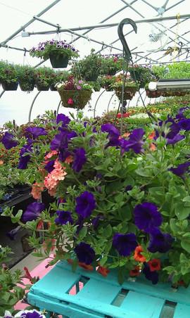 flowerbuds+planters+hanging+baskets.jpg