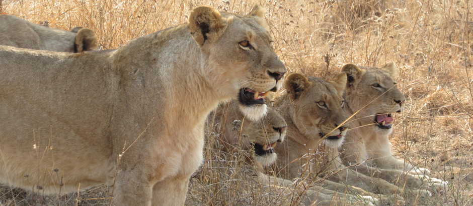 How to Plan an Unforgettable African Safari