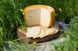 Ievas siers ritulī klasiskais (6 €)