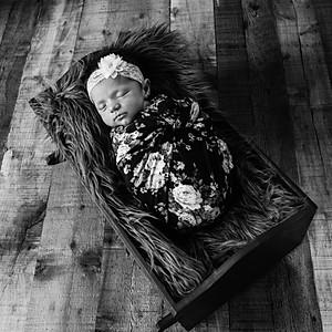 Rustilynn N Album - Newborn