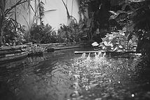 bassin & jardin