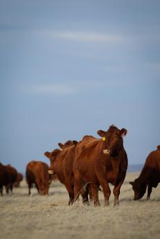 Cooper Ranch | Billings, MT
