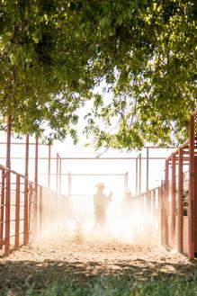 Clark Cattle Co. | Throckmorton, TX