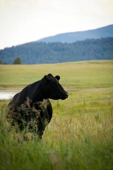 Two Creek Monture Ranch | Ovando, MT