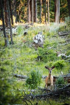 Two Creek Ranch | Ovando, MT