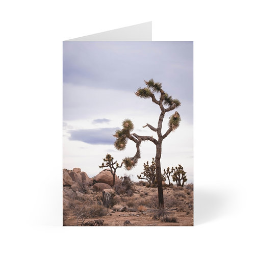 Greeting Cards (8 pcs): Joshua Tree National Park, California