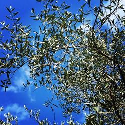 #nice06 #printemps #prendreletemps #olivier Le mot printemps est la contraction de _prendre le temps