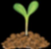 khadfield_GardenGrown_seedling3.png