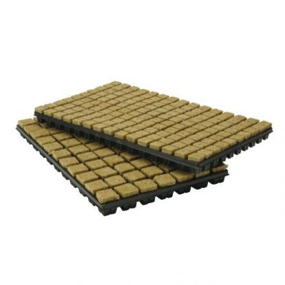 Tray of Rockwool Propagation Cubes