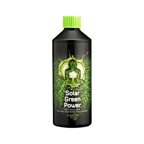 Buddhas Tree - Solar Green Power