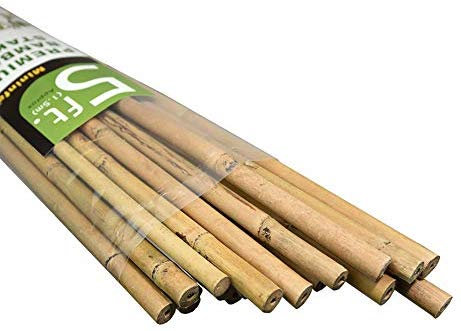 5' Bamboo Stakes (150cm) - Pack of 25