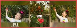 4 תמונות של מיכל עם רימון + לוגו (Medium)
