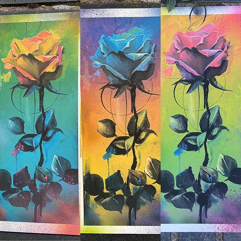 Primary Rose Pack