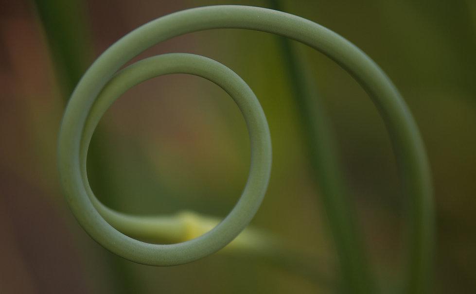 Spiraldynamik.jpg