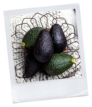 avos add6.png