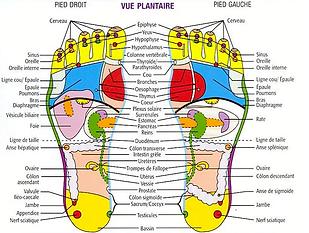 Réflexologie plantaire