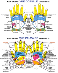 Carte réflexologie des mains
