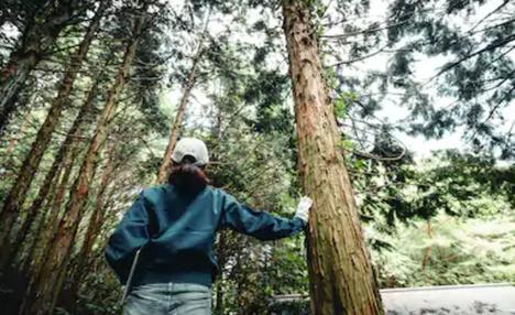 木と男p.png