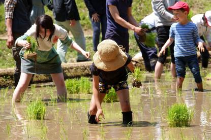 稲植える.jpg