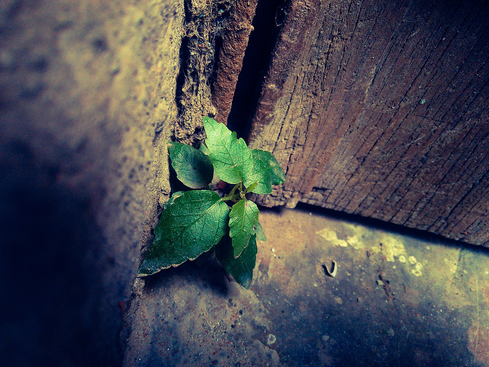New growth can always find a way, even in the most dismal, un-life-giving corners.
