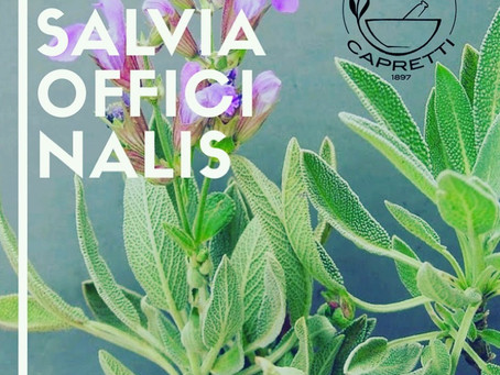 SALVIA OFFICINALIS TM