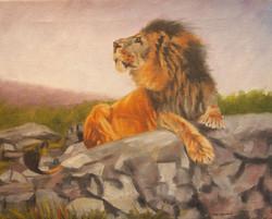 Lone Lion 'Lion resting on a rock'