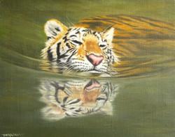 Cooling Off  - Tiger taking a dip