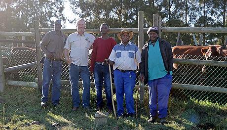 cattle, cattlmen, cowhands, Bonsmara,herd, breed, stud, polled, fertile